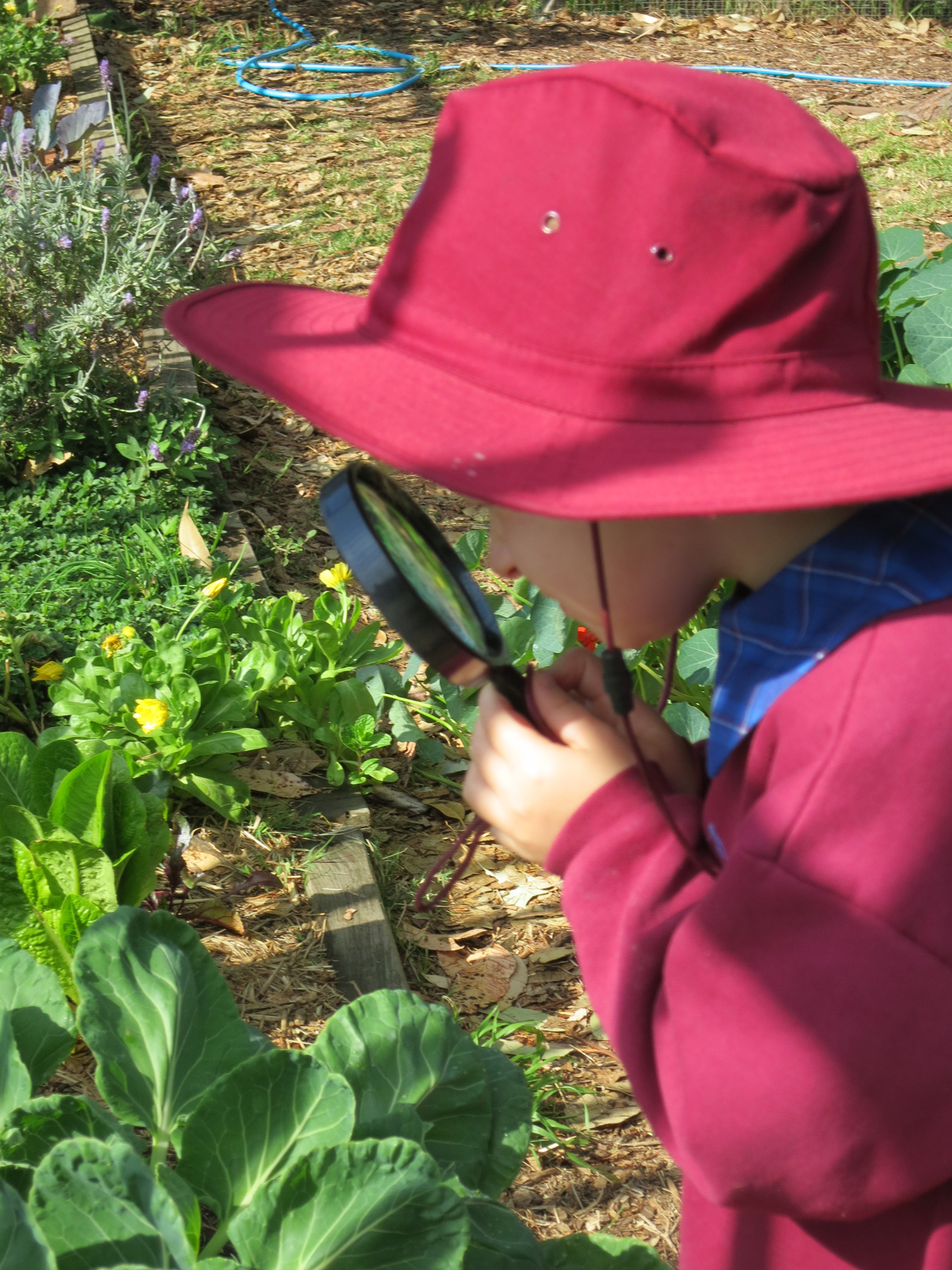 The Stephanie Alexander Kitchen Garden National Program Education Matters Magazine